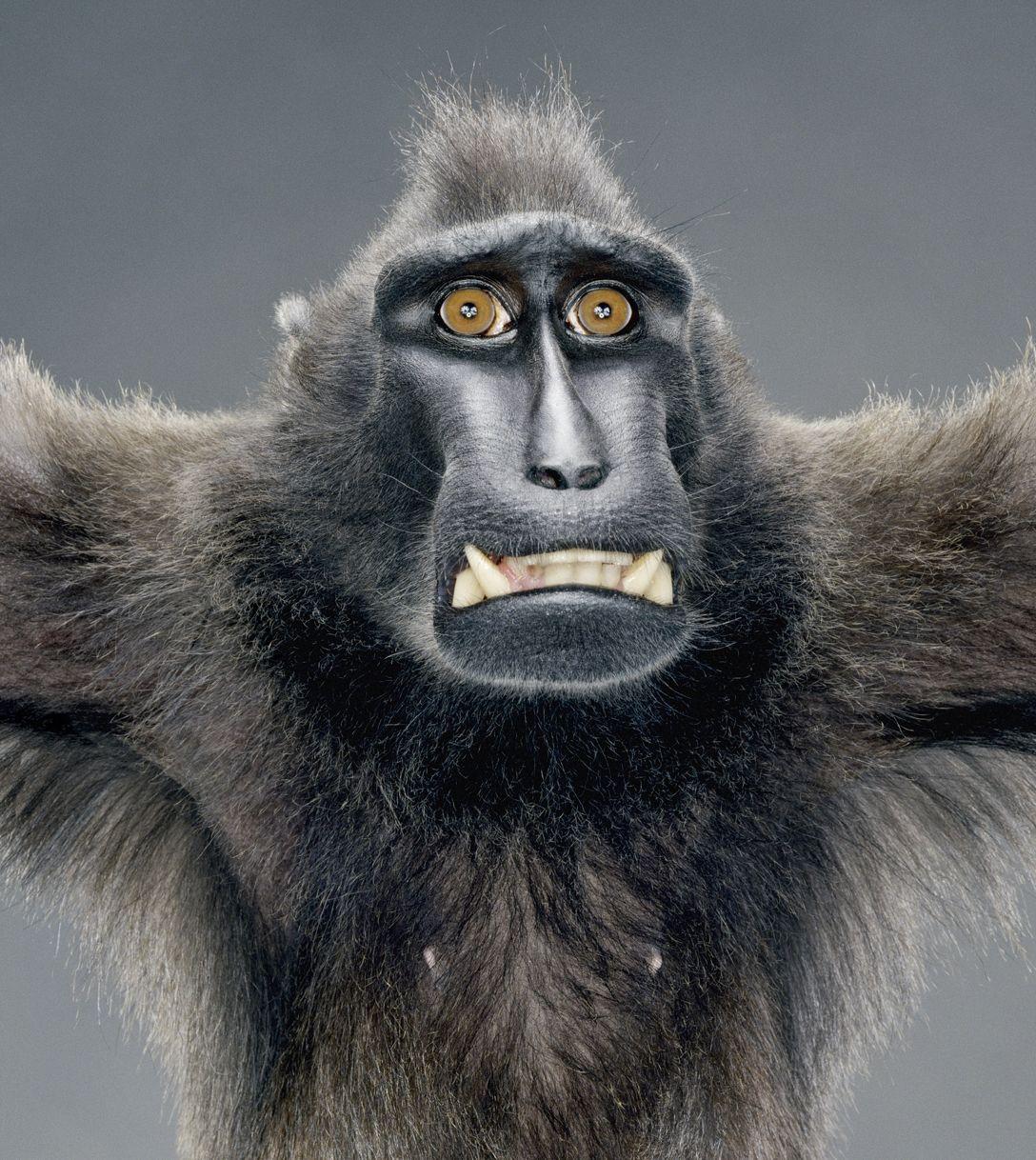 Фото офисных работников с приколом в роле обезьян 7